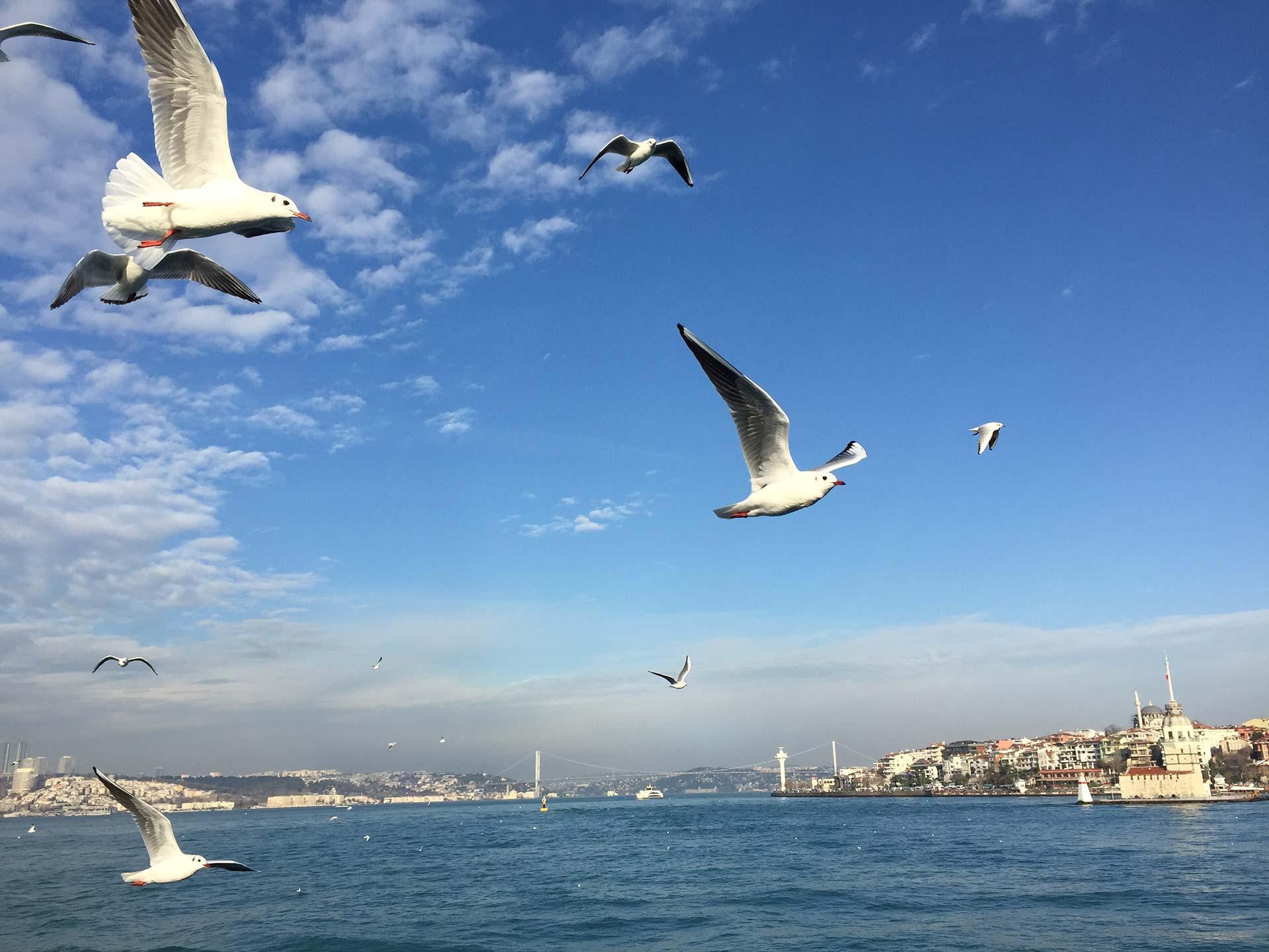 Seagulls, Bosphorous Istanbul